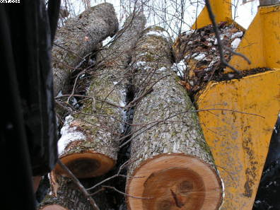 Logging Elm Log And Assorted Hardwood Firewood