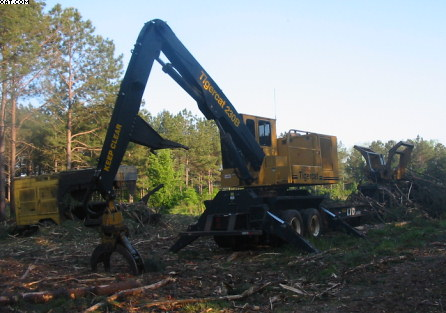 First Thinning a Pine Plantation in the South in Forestry and Logging