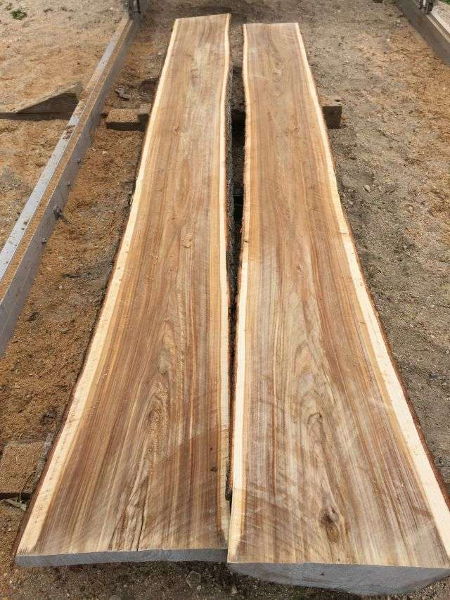 What Is Elm Good For In Sawmills And Milling