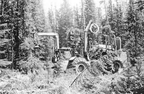 koering tree harvester?? in Forestry and Logging