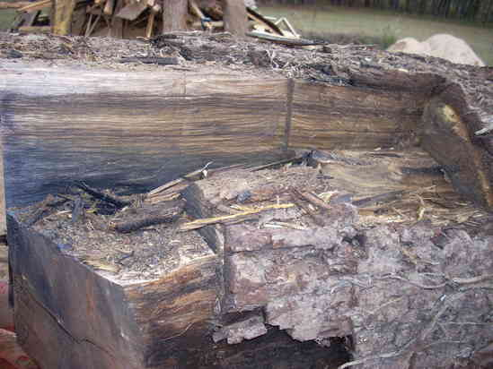What are Black Walnut logs worth? in Sawmills and Milling