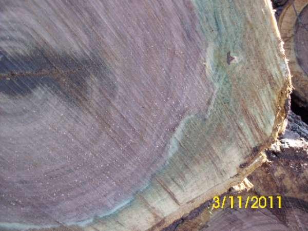 GREEN black walnut in Sawmills and Milling