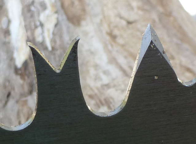 finding the right one man crosscut saw in Ask The Forester