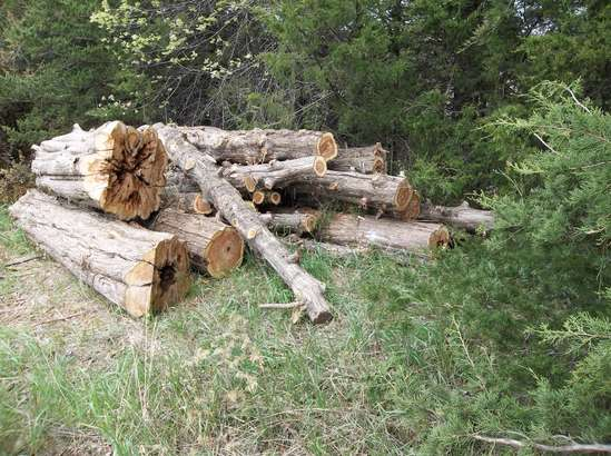 CEDAR LOG PRICES in Forestry and Logging