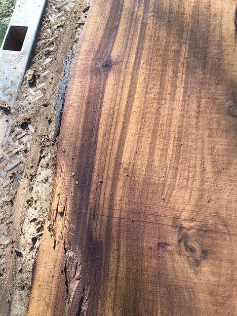 Arizona Walnut in Tree, Plant and Wood I D
