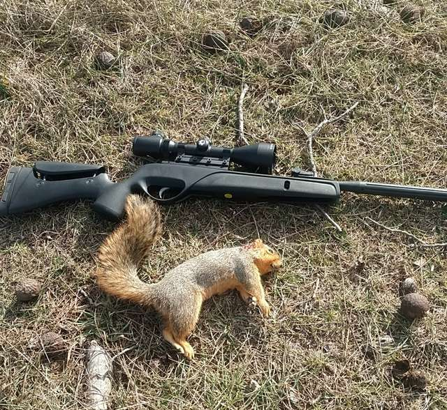 Air rifle squirrel hunting in The Outdoor Board