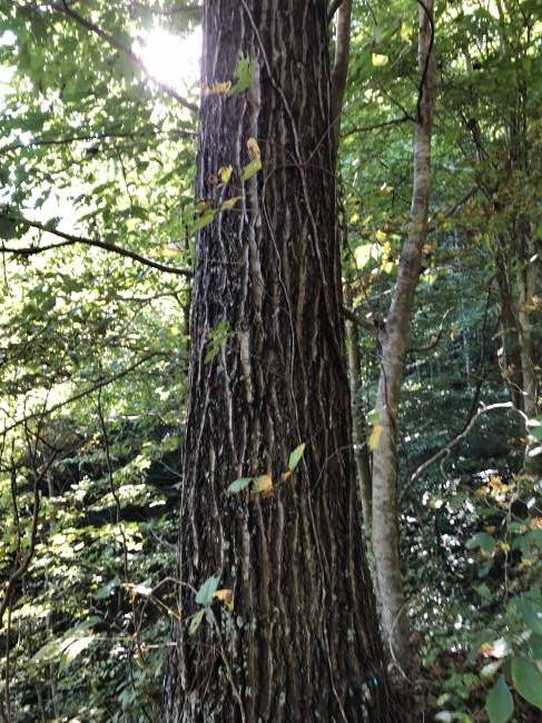 Buying timber land, looking for best location in Forestry