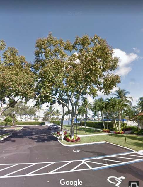 South Florida Tree Identification in Tree, Plant and Wood I D
